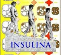 L'insulina e il suo ruolo fondamentale nei processi fisiologici.